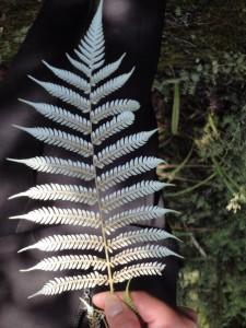 10-03-22-31紐西蘭(出差) (148)
