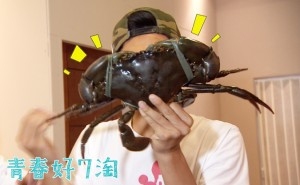 圖/巨無霸大螃蟹
